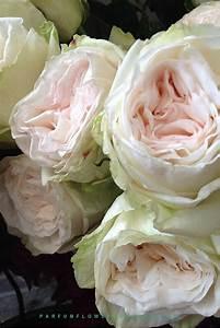 premium scented garden white o 39 hara