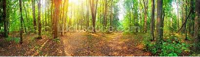 Panorama Forest Sunny Bosque Panoramico Bos Foresta