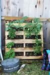 How to Make a Vertical Pallet Vegetable & Herb Garden pallet planter vertical garden
