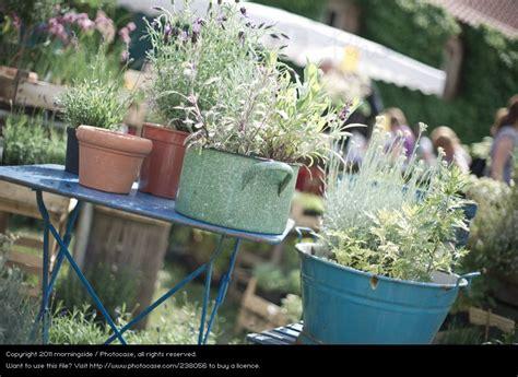 Französischer Garten Pflanzen by Photocase Pflanze Fruehling Garten Tisch Dekoration