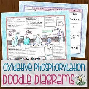 Oxidative Phosphorylation Doodle Diagrams