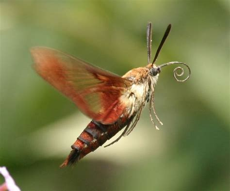 hummingbird nest ranch