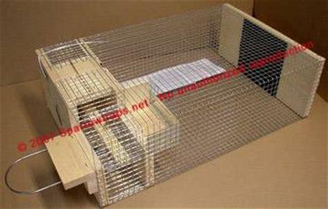 tmb studios deluxe repeating sparrow trap  bird house