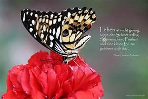 Blume Und Leben : leben ~ Articles-book.com Haus und Dekorationen