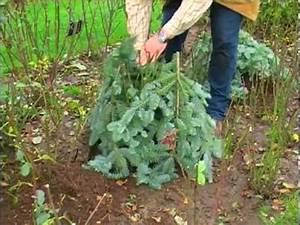 Begleitpflanzen Für Rosen : winterschutz bei rosen youtube ~ Orissabook.com Haus und Dekorationen