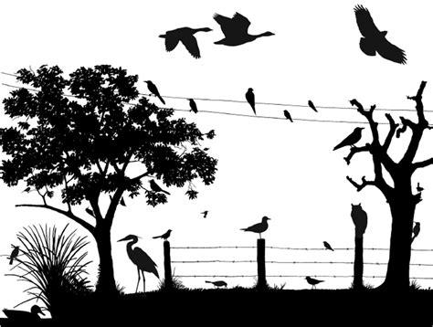 silhouettes scene cornell lab  ornithology birdsleuth