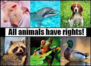 Animal Rights - Animal Rights Photo  13295974