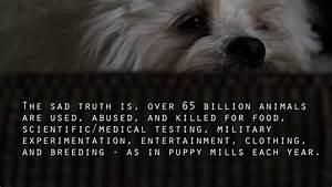 Animal Rights Psa