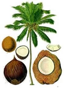 Photos of Coconut Oil Benefits