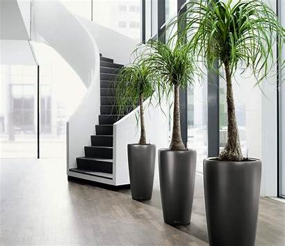 Indoor Tall Plants Homesfeed Recommended Ones