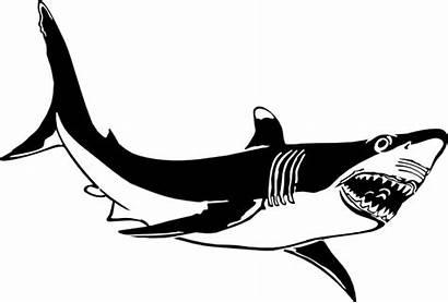 Shark Clip Clipart Happy Clipartion