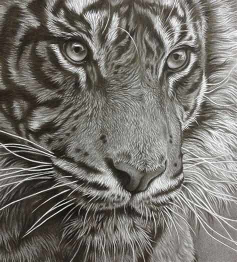 tiger pencil drawing art breathing room   spirit