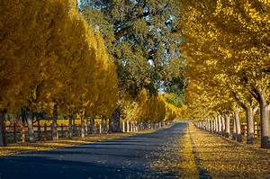 California Fall Color » Napa Valley  Fall