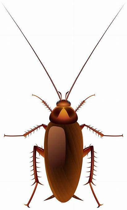 Cockroach Clip Clipart Cartoon Insect Background Transparent
