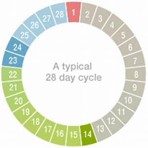 Typical 28 Day Menstrual Cycle