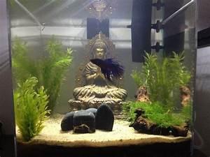 Deco Aquarium Zen : 1000 images about aquariums on pinterest gardens ~ Melissatoandfro.com Idées de Décoration