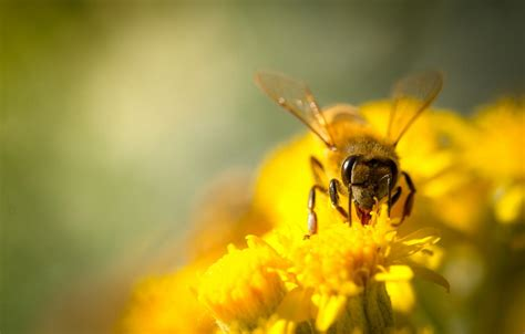 Causes Of Bee Decline