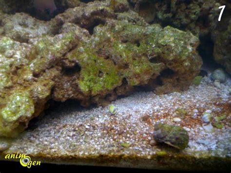 aquarium algues vertes sur le les algues dans un aquarium d eau douce type d 233 veloppement 233 limination animogen