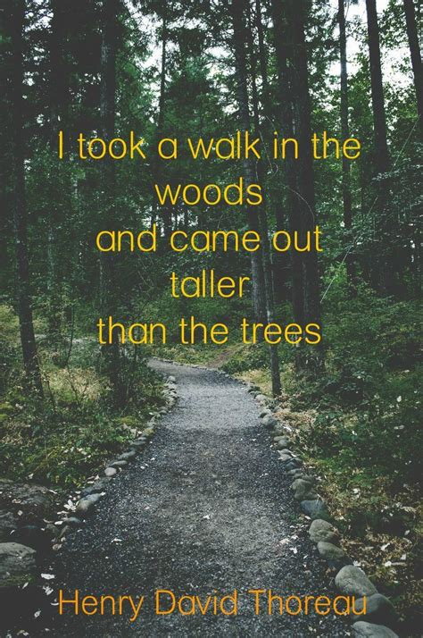 Quotes About Walking In The Woods