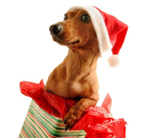petsofoz com blog pet news information and product reviews merry christmas