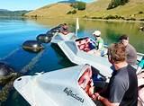 Aluminum Boats New Zealand Photos