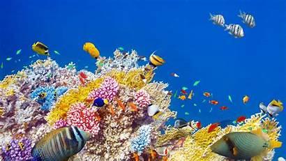 Fish Tropical Wallpapers Desktop Wallpaperplay Aquarium Animal
