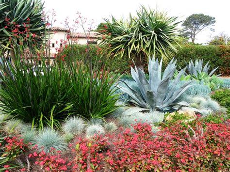 mediterranean plants debora carl landscape design