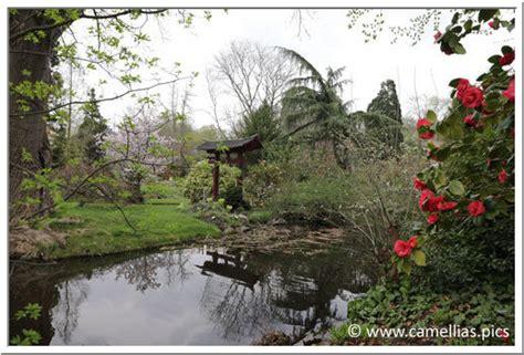 Japanischer Garten Leverkusen Plan by Camellias Pics Visite Leverkusen