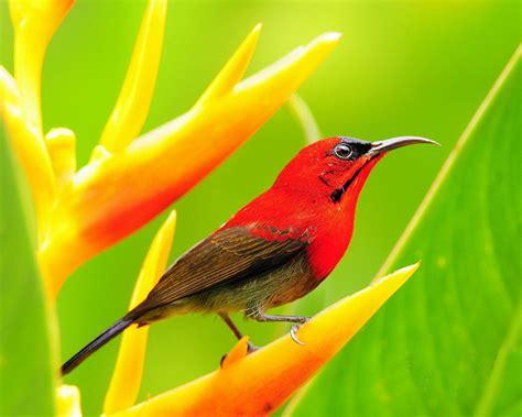 Red Bird Desktop Wallpapers 1280x1024