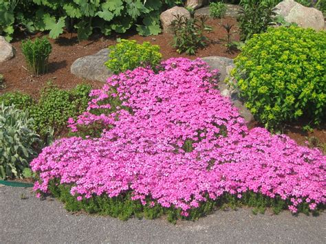 flowering perennial ground cover journal garden design montreal perennial flower gardens gardening tips gardening advice
