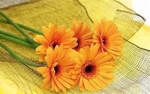 Orange Flower HD Wallpapers