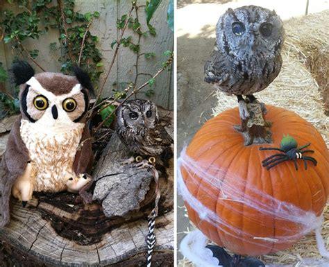 meet zeus  rescued blind owl  stars   eyes