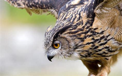 birds walpaper reviews owls wallpaper