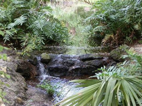 Jungle Garden Sarasota - turtle picture of sarasota jungle gardens tripadvisor