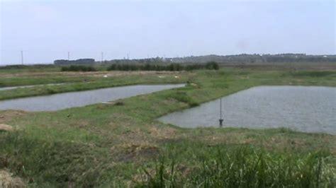 fish ponds  western kenya dominion farm aquaculture
