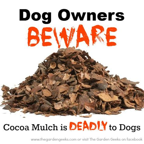 is mulch toxic cocoa mulch can be toxic to pets for seed giveaways daily tips and plant info come join us on