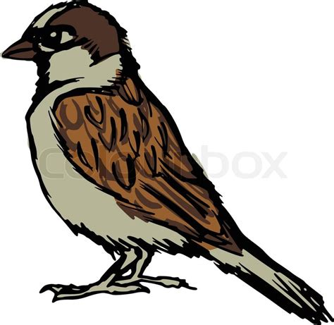 hand drawn sketch cartoon illustration  sparrow stock vector colourbox