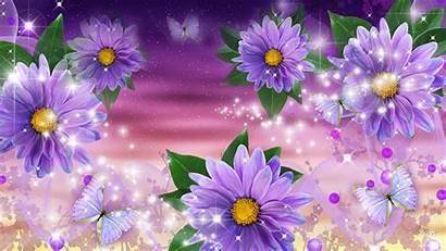 Lavender Daisy Gerberas Wallpapers Desktop Gerber Gerbera