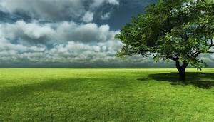 Big Tree with Grass Field Landscape wallpaper | WALLPAPER ...