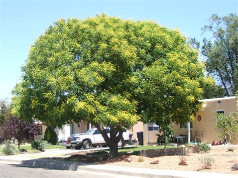 small shade trees trees that please nursery shade trees for small spaces