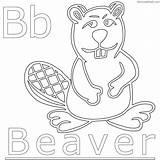 Beaver Coloring Chakiradecor sketch template