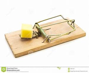 Mouse Trap Stock Image  Image Of Cunning  Risky  Lure