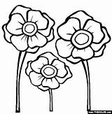 Poppy Coloring Poppies Template Colouring Remembrance Printable Flower Anzac Drawing Thecolor Templates Others Library Them Sheets Printables Getdrawings Send Clip sketch template