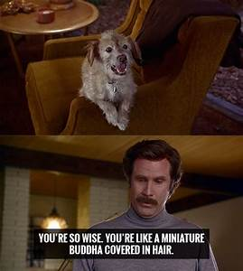 Stay classy wit... Anchorman Hungover Quotes