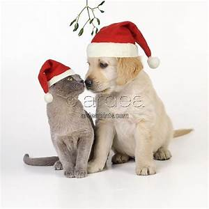 Christmas Kitten Puppy Image Search Results Puppies And ...