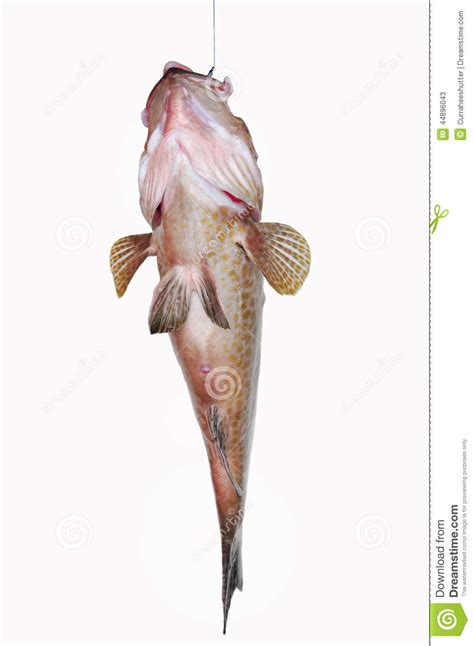 fresh fillet grouper fish healthy sea background food preview diet fishing