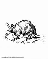 Aardvark Coloring Animal Ant Wild Honkingdonkey Animals sketch template
