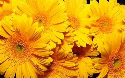 Yellow Aesthetic Flowers Wallpapers Backgrounds Wallpaperaccess Plus