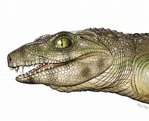 Utah Scientists Discover That Crocodiles Were Once Vegetarians  But  In The End  It Was
