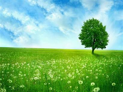 Grass Summer Season Desktop Wallpapers Tree Background